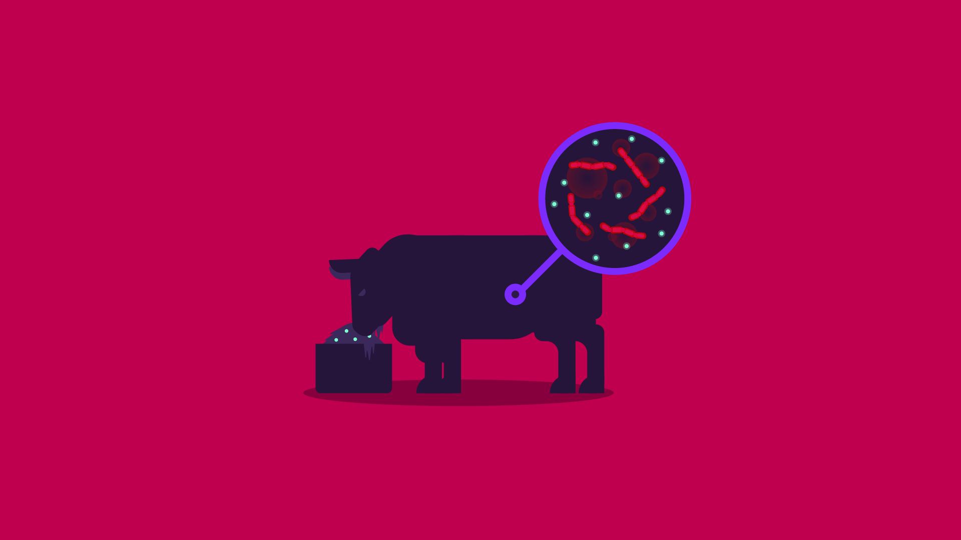 Kurzgesagt In A Nutshell Antibiotics