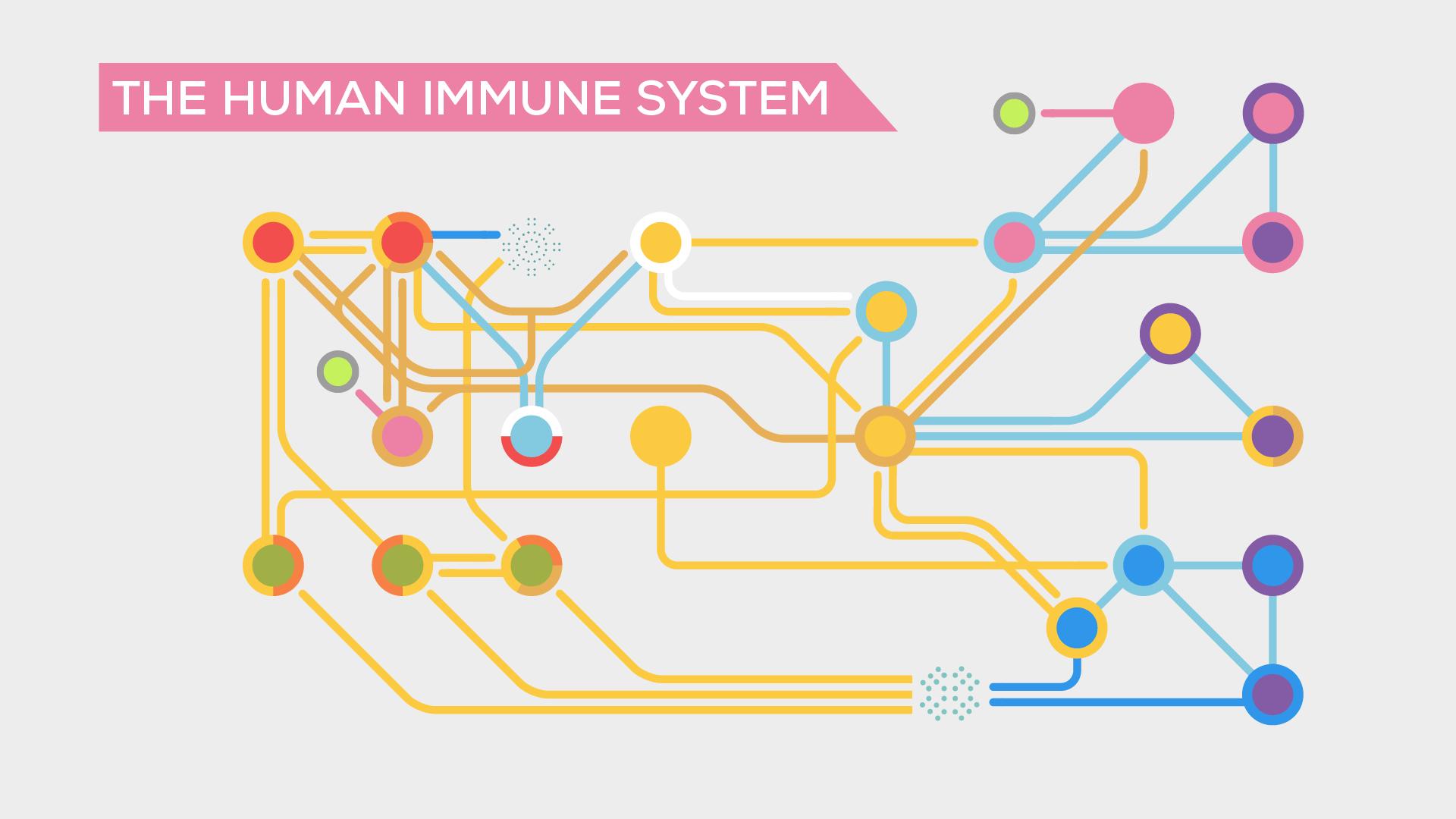 270_Immune System_Kurzgesagt Project Pic 2